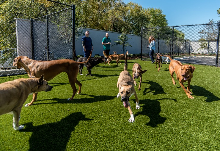 Dogs At Daycare